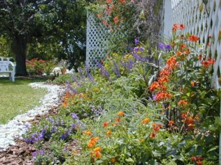 trellis butterfly garden with coral honeysuckle vine